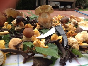 Bixia champignon -Laure fernandez